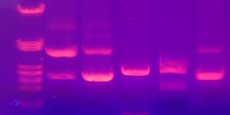 Lab Skills Nights! - Gel Electrophoresis (separate and measure DNA size) tickets