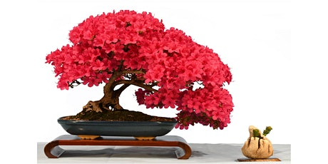 Bonsai Show  10-11 Oct Canberra Bonsai Society tickets