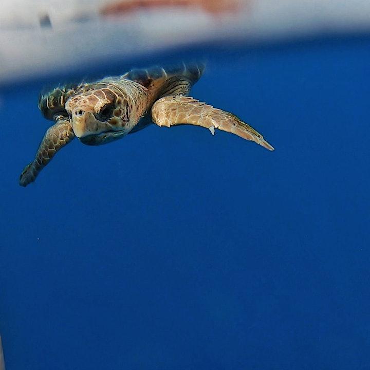Imagen de Safari Kayak with marine life