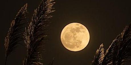 Full Moon Meditation tickets