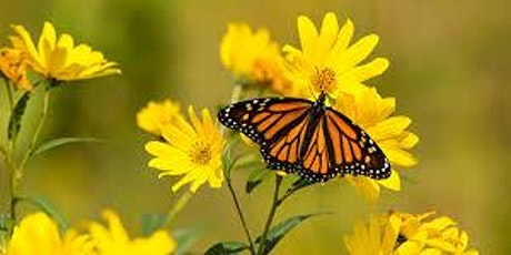 Monarch Butterfly Conservation Talk/Q&A tickets