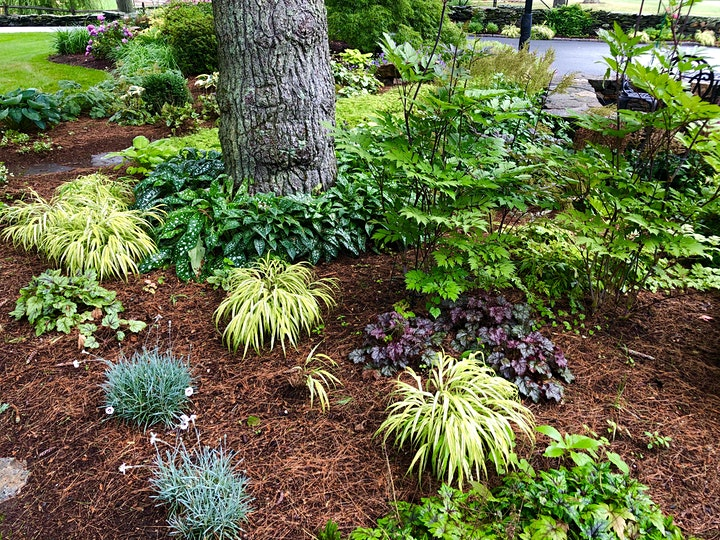 Spring Garden Tour, Saturday, April 10th at 10am image
