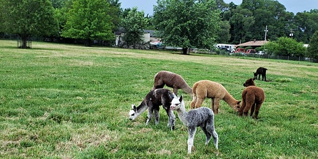Alpaca Yoga  Farm Experience!  Up close and personal with alpacas! tickets