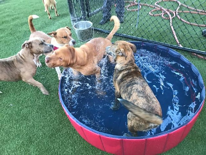 Virtual Animal Shelter Volunteer Fair image