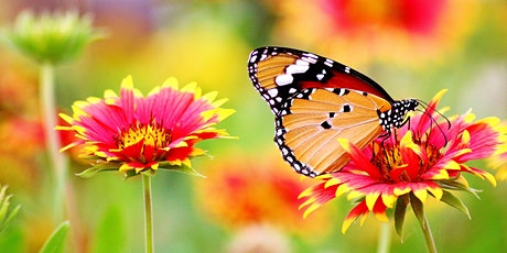 Butterfly Wonderland Fall Plant Sale tickets