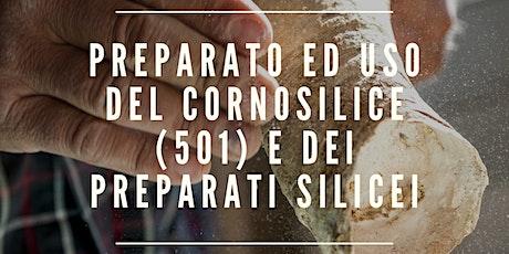 PREPARATO ED USO DEL CORNOSILICE (501) E DEI PREPARATI SILICE biglietti