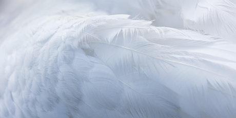 LIVESTREAM | Archangel Meditation tickets