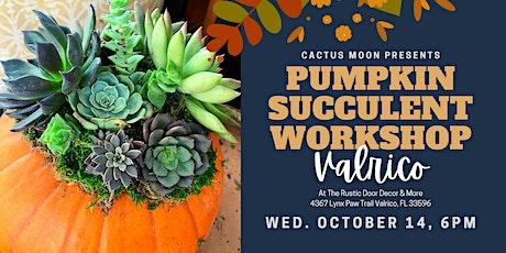 OCT 14th - 6:00PM: Valrico Pumpkin Succulent Workshop at The Rustic Door tickets