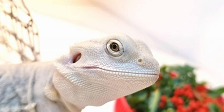 Show Me Reptile and Exotics Show( Nashville) tickets