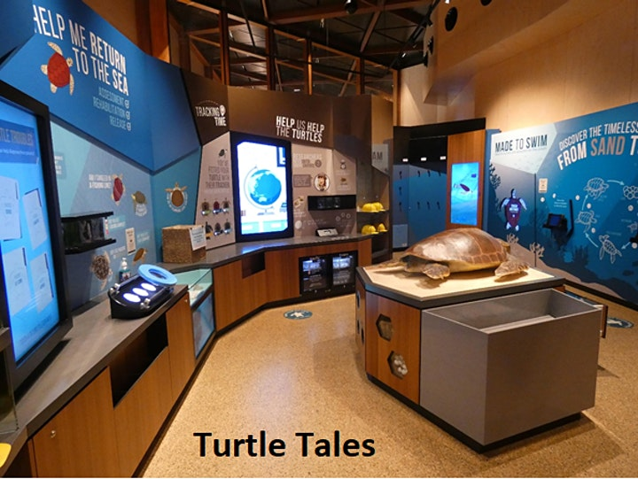 Mon Repos Turtle Centre -  Daytime Admission Tickets image