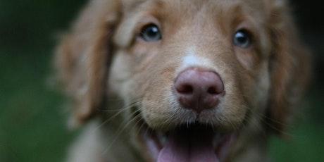Monday Puppy Class tickets