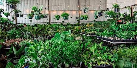 Sydney - Huge Indoor Plant Sale - Virtual Indoor Plant Sale tickets