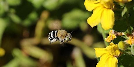 Bee Friendly Gardens tickets