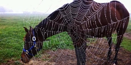 Halloween with the Horses tickets