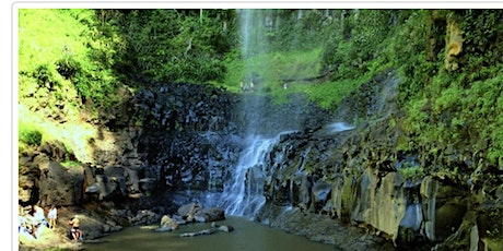 Saturday 24 OCT, Purling Brook Falls Walk Springbrook 3 hours -then coffee tickets