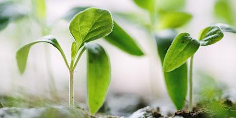 MORGENMØDE: Bæredygtig vækst – hvordan kommer du i gang, 4. November tickets