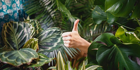How to Care for your Houseplants - Free Talk and Demo! tickets
