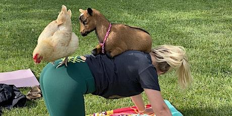 Tiny Goat Yoga tickets