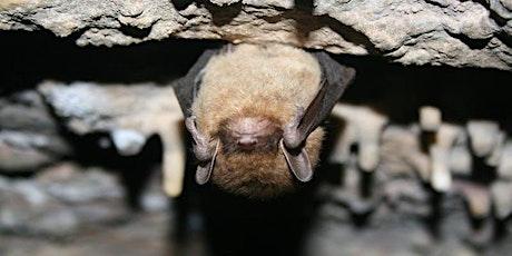 Bat Night at Gorman Heritage Farm tickets