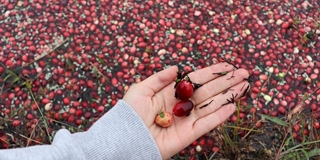 Cranberry Harvest Hikes tickets
