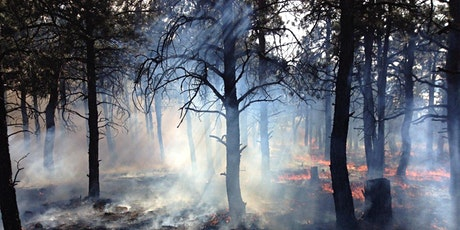 Take-a-Hike: Fire and Forest Management at Heil Valley Ranch tickets