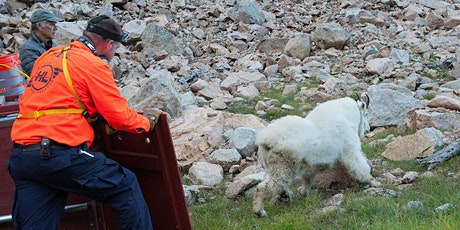 The Great Goat Roundup: Translocation of Olympic Natl. Park Mountain Goats tickets