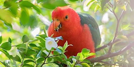 Backyard Bird Talk tickets