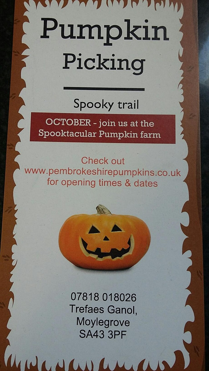 Pick your own Pumpkins this October. image