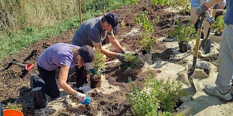 Native Tree and Shrub Planting at Humber Bay Park East tickets