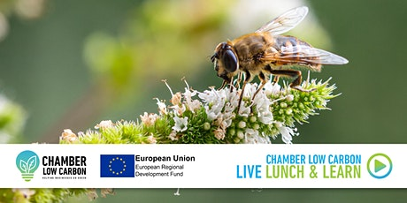 Chamber Low Carbon LIVE Lunch & Learn - Bees and biodiversity – key workers tickets