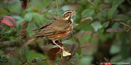 Autumn Bird ID tickets
