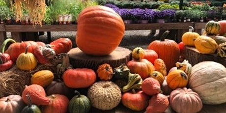 Fall Outdoor Picnic & Live Music at The Pound Ridge Nursery tickets