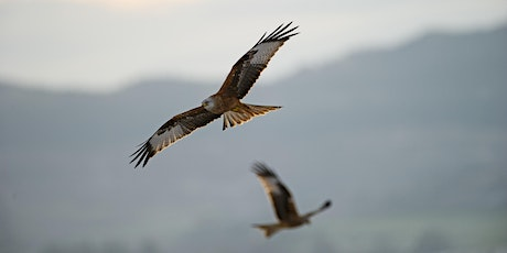 Welsh Bird Conservation with Dan Rouse tickets