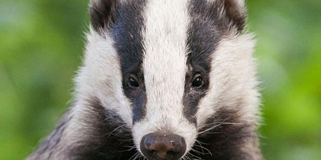 Badger Survey Day tickets
