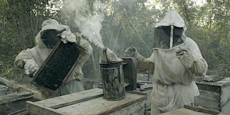 Vad hände med bina? - På plats tickets