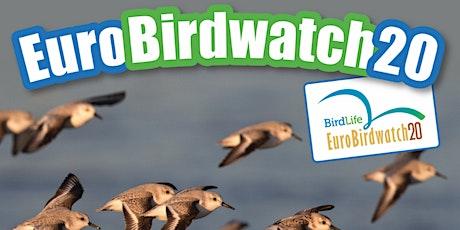 Eurobirdwatch20  a Germignaga biglietti