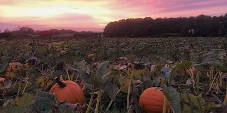 Tuesday the 27th October, Pumpkin Picking at East Grange tickets