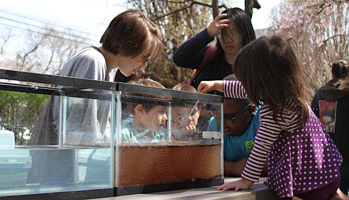 Concurrent Streams - Delaware River Festival Event image