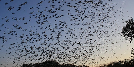 All About Bats! Zoom Webinar with Corky Quirk, NorCal Bats tickets