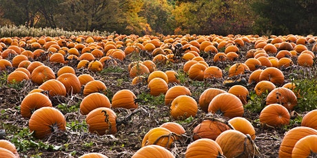 National 4-H Week Pumpkin Carving/Decorating Contest tickets