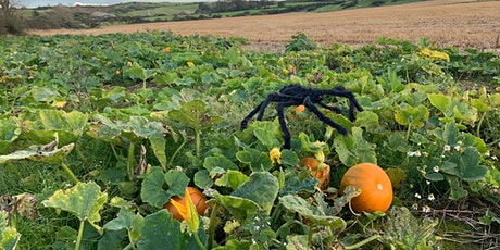 Pick your own Pumpkins this October. tickets
