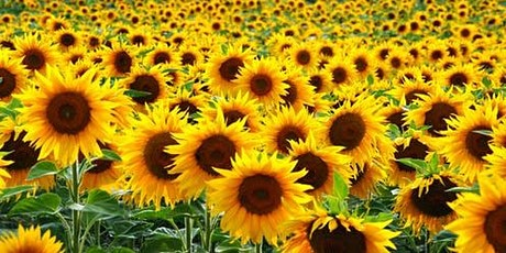 2020 You Pick Sunflower Field tickets