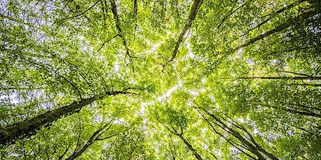 Cycle : les quatre saisons / La symbolique des arbres tickets