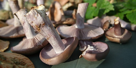 Redisher Woods Fungi Foray for UK Fungus Day tickets