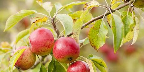 Winter Apple Tree Pruning NEW ONLINE FORMAT tickets