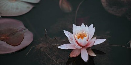 Opening the Lotus by Ajahn Brahm tickets