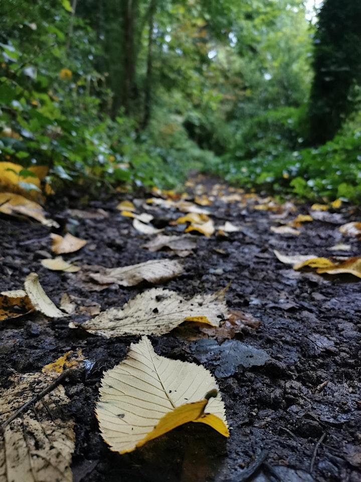 Mindful Autumn Walk image