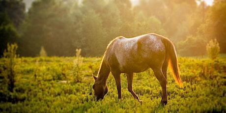 Offene Fragestunde Oktober mit dem Thema: Pferde eindecken oder scheren? Tickets
