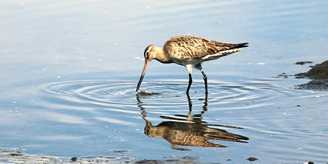 Celebrate the return of the Parramatta River Godwits - Tour 1 tickets