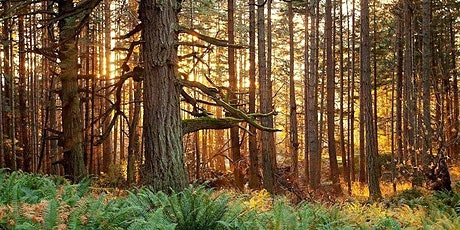 Forest Therapy Walk - Stanley Park tickets